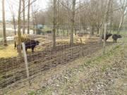 vadháló,vadkerítés,drótfonat,kerítés építés,akác oszlop,vadriasztó huzal
