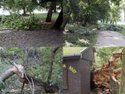 Erdőtisztítás és fa kivágás