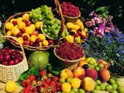 Területi értékesítőket keresünk kertészeti weboldal értékesítésére
