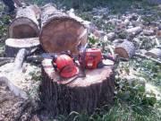 Favágás, darabolás, fakivágás, alpintechnikával