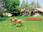 Villanypásztor kutyáknak - Láthatatlan kerítés fotó