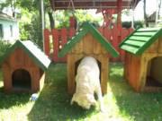 kutyaház eladó. fotó