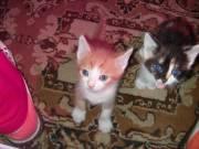 Ingyen kiscicák