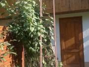 Eladó Békéscsabán egy házilag hegesztett erős, támasztékos szögvas létra.