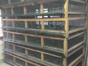 Egyedi Tervezésű Kis Állat Ketrec 250x125 Cm Akciósan Áron Alul Több Darab fotó