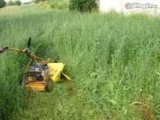 Telektisztítás, kerti munka , ásás ,  eső csatorna takarítás, mázolás