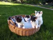 Ingyen elvihető kismacskák