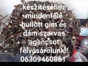 Szarvas Agancs felvásárlás országosan 06309460861