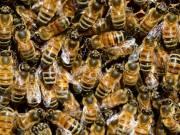 Méhész képzés