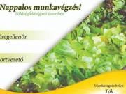 1 műszakos MINŐSÉGELLENŐR -zöldségfeldolgozó üzem