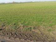 Kondoros és Kardos környékén 3,5 hektár termőföld eladó