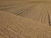 Túrkeve határában 3 hektár termőföld eladó