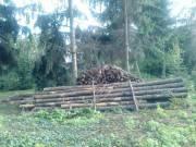 Hengeres fenyőfa eladó!
