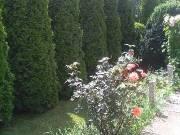 Csendes helyen Debrecentől 18 km-re kertes családi ház eladó!