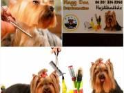 Kutyakozmetika Hajdúhadházon
