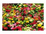 Kertészeti eladót keresünk