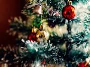 A legnépszerűbb fenyőfa fajták karácsonyra