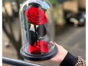 Búrás örök rózsa