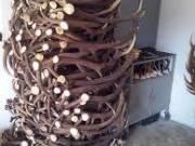 szarvas agancs felvásárlás országosan