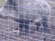 vadháló drótháló kerítésdrót szögesdrót oszlop