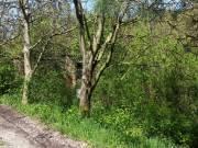 Pécs peremterületén, állattartásra alkalmas területek eladók!, Szabolcs, Unnamed Road undefined