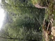 Erdőtelepítési tervek teljes körű ügyintézéssel - EU-s pályázathoz is