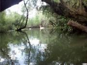 Tisza-tavi ökotúra HÓD vízitúra
