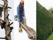 Telektisztítás, sövényvágás, bozótirtás, fakivágás, fűkaszálás.T:06-70-300-7470
