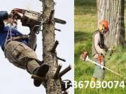 Fűkaszálás,fakivágás,telektisztítás,sövényvágás.T:06-70-300-7470