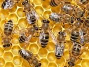 Méhek eladók