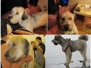 Elveszett kutya