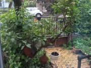 1,5 szobás zuglói önkormányzati lakást cserélnék Kispestire