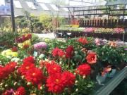 Kertészeti árudába szakképzett kertész kollégát keresünk!