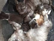 8 és 10 hetes kiscicák szerető gazdit keresnek