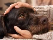Állatok megmentése, etetése